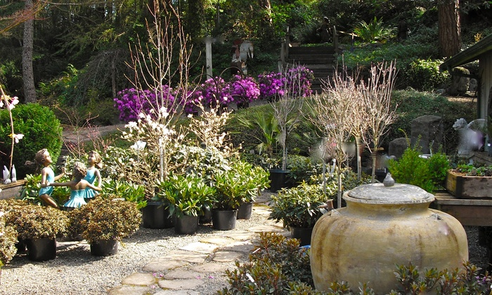 Plants and flowers rosedale garden groupon for Gardening 4 less groupon