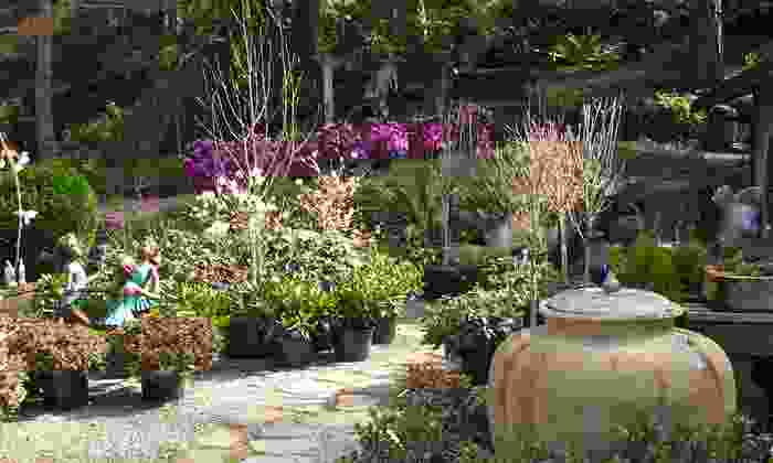 Rosedale Garden - Rosedale: $15 for $30 Worth of Plants and Flowers at Rosedale Gardens