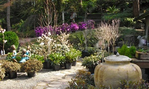 Rosedale Gardens: $15 for $30 Worth of Plants at Rosedale Gardens