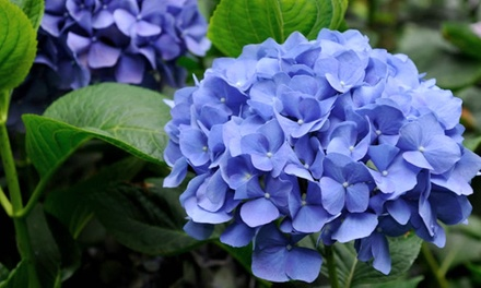 $25 for $50 Worth of Perennials, Shrubs, and Grasses at Miller Nursery