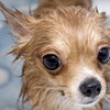 Up to 55% Off Dog Grooming at Pet Paw's