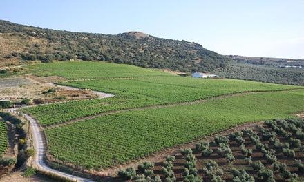 Visita a bodega y cata con snack para 2 o 4 personas desde 16,95 € en Bodegas Morosanto