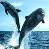 Up to 47% Dolphin Sightseeing Cruise