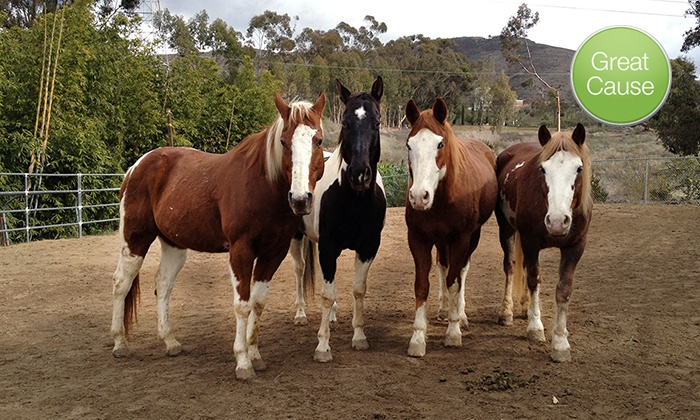 Laughing Pony Rescue: $10 Donation to Help Rebuild Corrals for Rescued Horses