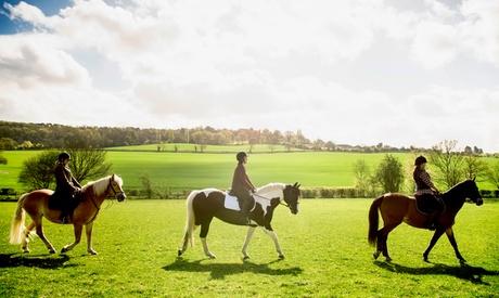 4 u 8 clases de equitación a caballo para adulto o en pony para niño desde 29,95 € en Hípica Guadalix