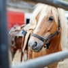 33% Off Pony-Riding Lesson