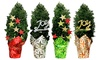 """Decorated European Cypress Tree with 5"""" Pot: Decorated European Cypress Tree with 5"""" Pot"""