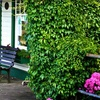 Up to 82% Off Photo Walk in Fort Langley