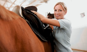 Twisted Pine Farm: One or Three Private 60-Minute Horseback-Riding Lessons at Twisted Pine Farm (Up to 57% Off)