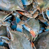 Half Off Seafood from Chesapeake Crab Connection