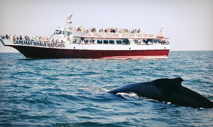 Cape May Whale Watcher - Cape May: Three-Hour Tour for One, Two, or Four from Cape May Whale Watcher (Up to 58% Off)