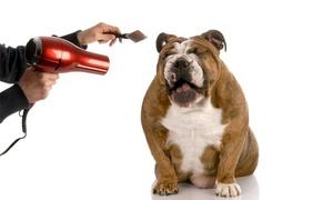 Holly and Hugo: Formation pour devenir assistant vétérinaire avec Holly and Hugo à 29 € (83 % de réduction)