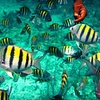 Up to 51% Off Snorkeling Trip for One or Two