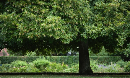 $200 Towards Tree Services from T & L Tree and Landscape ($400 Value)