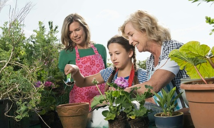 $15 for $25 Worth of Plants and Gardening Supplies at Gardens of Babylon