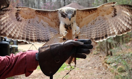 Interactive Raptor Experience for Two or Four at Wings to Soar (Up to 58% Off)