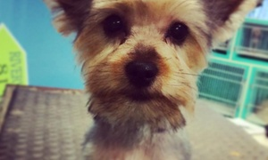 St. Pete Canines: Grooming Services from St. Pete Canines (55% Off)