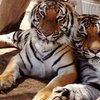 38% Off at Forever Wild Exotic Animal Sanctuary