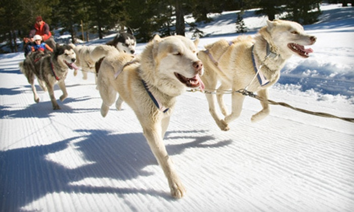 Hidden Meadow Farms - Huntsville: One-Hour Dog Sled Tour for One, Two, or Four at Deerhurst Resort (Up to 60% Off)