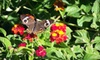 """Fort Worth Botanical Society - Fort Worth: """"Butterflies in the Garden"""" Visit for Two or Four at Fort Worth Botanic Garden (Up to 53% Off)"""