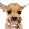 66% Off New-Pet Exam at Affordable Pet Hospital
