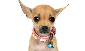 Affordable Pet Hospital: $12 for a New-Pet Wellness Exam at Affordable Pet Hospital ($35 Value)