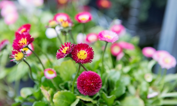 Mary Kay Jenny: Planting Flowers and Vegetables Course, Garden Design Certification Course, or Both at Mary Kay Jenny (98% Off)