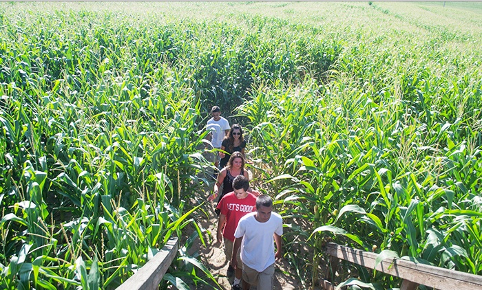 Lake View Farms - Northwest Hillsboro: Corn Maze Admission with Popcorn and Drinks for Two or Four at Lake View Farms (Up to 50% Off)