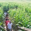 Up to 50% Off Corn Maze Entry and Snacks for Two or Four