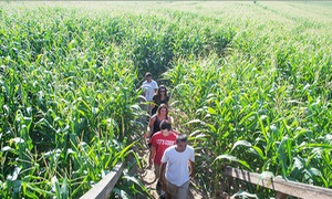 Lake View Farms: Corn Maze Admission with Popcorn and Drinks for Two or Four at Lake View Farms (Up to 50% Off)