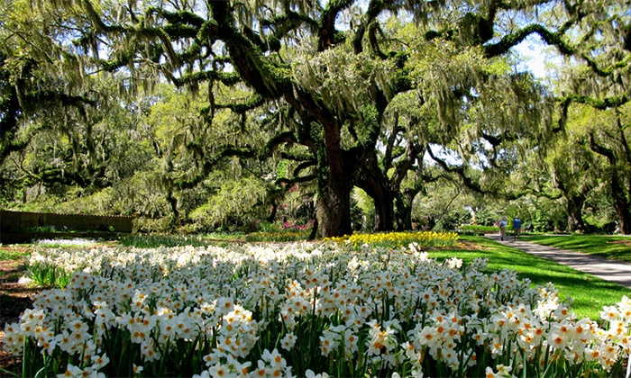 Beautiful Brookgreen Gardens   Between Murrells Inlet And Pawleys Island: Admission  For Two, Four,