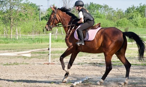 Gatend Equestrian: One-Hour Hacking for One or Two at Gatend Equestrian