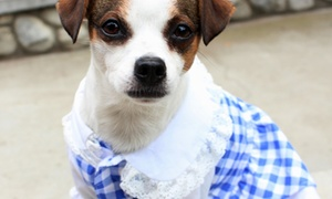 The Dapper Dog Social: $8 for $20 Worth of Museum Visits — Dapper Dog Social