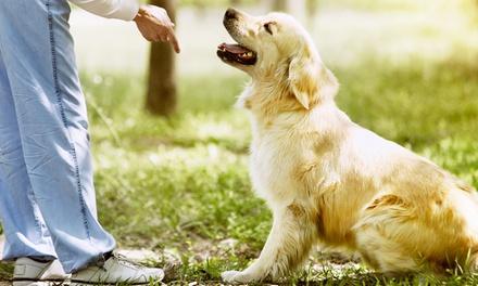 Curso de adiestramiento canino para 1 perro por 34,95 €