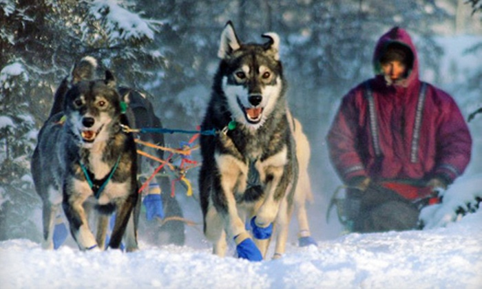 Turning Heads Kennel - Seward-Hope: $249 for a Winter Dog-Sledding Tour for Two at Turning Heads Kennel ($498 Value)