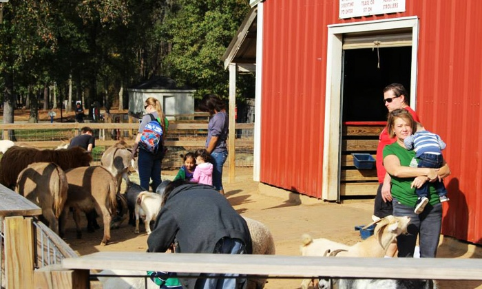 7 Acre Wood - Conroe: Family-Fun Outing for Two, Four, or Six with Fountain Drinks and Petting-Zoo Feed Cones at 7 Acre Wood (44% Off)