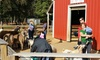 7 Acre Wood - Hunter's Glen: Family-Fun Outing for Two, Four, or Six with Fountain Drinks and Petting-Zoo Feed Cones at 7 Acre Wood (44% Off)