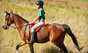 One Or Three Private Horseback-riding Lessons At Pegasus Riding School (up To 55% Off)
