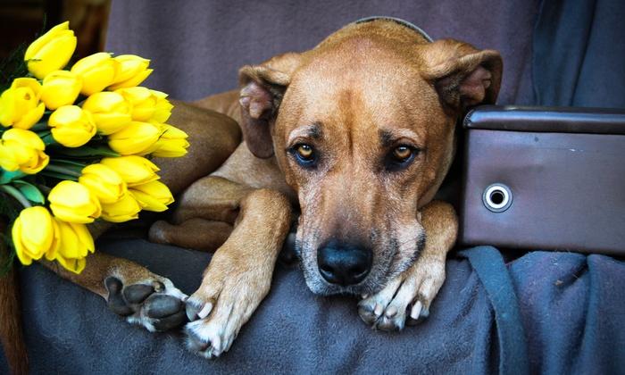 Nekospective - San Diego: 60-Minute Pet Photo Shoot from Nekospective (70% Off)