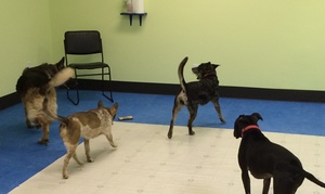 Best Dog Ltd.: Two Days of Doggy Daycare at Best Dog (46% Off)