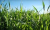 Wasatch Natural Organic Services: Fertilizer and Weed Control, Pest Control, or Package of Both Services from Wasatch Natural Organic Services (Up To 53% Off)