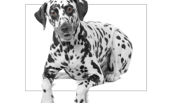 The Click Group: Pet Photoshoot for £19 at The Click Group (93% Off)
