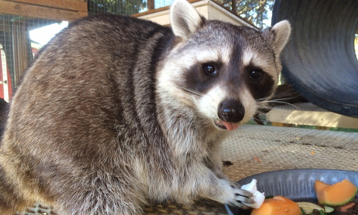 Randall Oaks Zoo - Dundee: $10 for $13 Worth of Petting-Zoo Visits — Randall Oaks Zoo