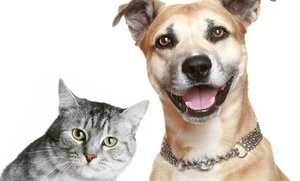 AAA Pet Services: Comprehensive Pet Exam and Rabies Vaccine for One or Two Cats or Dogs from AAA Pet Services (Up to 59% Off)