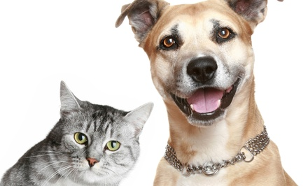 Comprehensive Pet Exam and Rabies Vaccine for One or Two Cats or Dogs from AAA Pet Services (Up to 53% Off)
