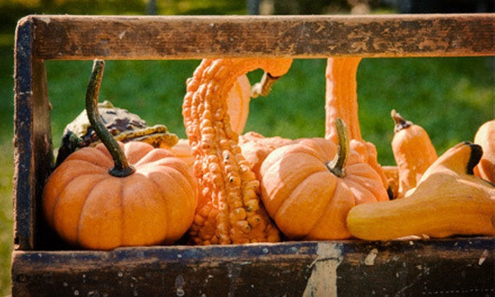Mr. Pumpkin - Niagara Falls: General Admission for Four or Six to Corn Maze, Hay Rides, and More at Mr. Pumpkin (Up to 55% Off)