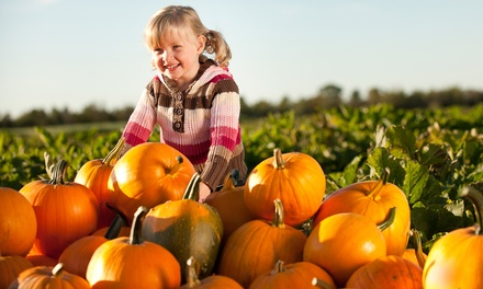 Pumpkin-Patch Admission with All-Activity Band for One, Two, or Four from Halter, Inc. (50% Off)