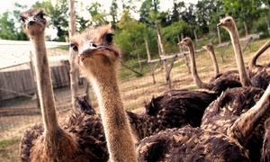 Nid'Otruche: Visite guidée et safari tracteur à la ferme Nid'Otruche pour 2 adultes ou 1 famille (jusqu'à 54 % de rabais)