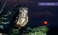 Falconry Experiences: An Evening With Owls from £9 (Up to 63% Off)