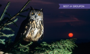 Falconry Experience: Falconry Experiences: An Evening With Owls from £10 (Up to 56% Off)